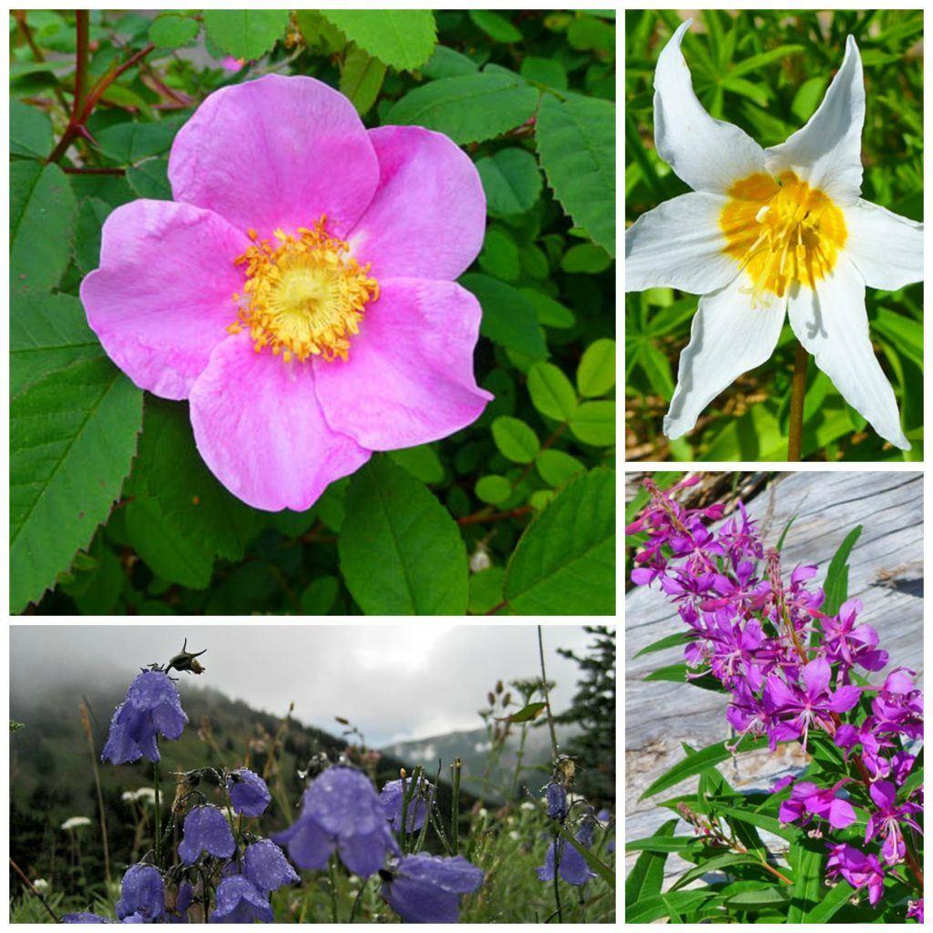 major flower collage