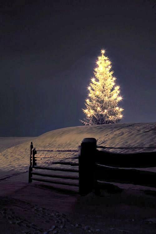 christmas tree best