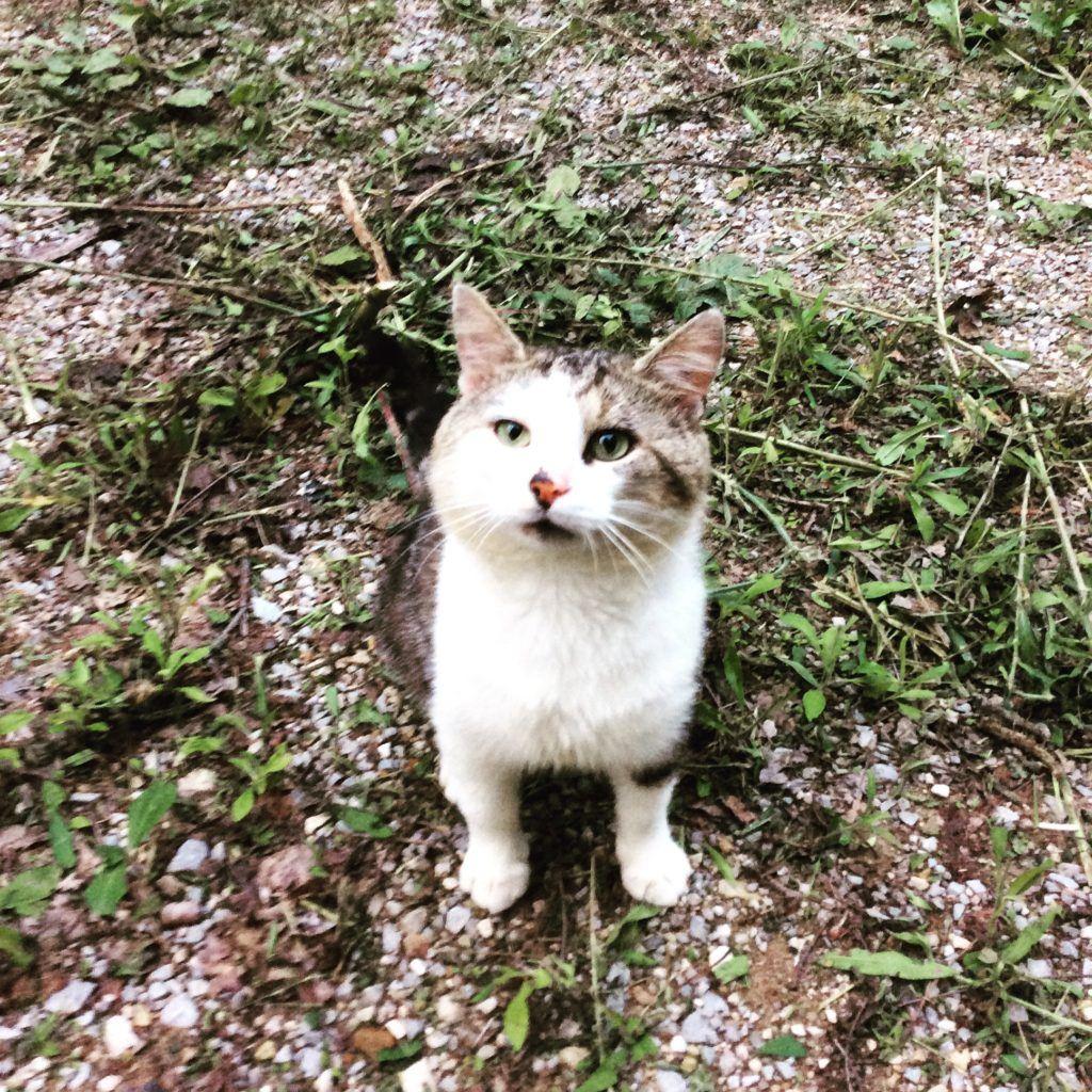 july cabin cat